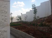 السلط..حوض البقعان .. حي الامير راشد