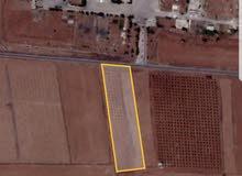 ارض زراعية وتجارية ع الطريق الزفت بعرض 55 متر جنب طريق اوستراد درعا دمشق بموثبين