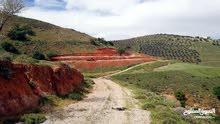 ارض في أم الخال 5.5 دونم ملاصقة ل بد الجديده للبيع