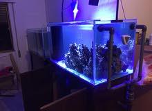 حوض سمك بحري للبيع