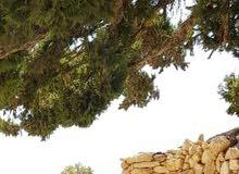 ارض جنب اتوستراد الضنیه_الهرمل