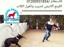 تدريب كلاب الكينج اكاديمى