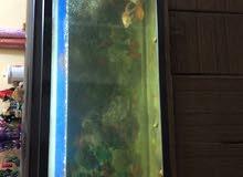 حوض اسماك للبيع حجم 150 سم x 50 سم