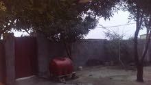 خوان عندي بيت بزبير قرب اصحفيين بيت غرفتين وصاله ومطبخ وديوان وحمام ومشتملات