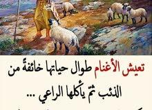 كاشير ومحاسب مطاعم ومطابخ خبره 12 سنه