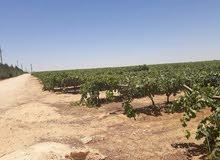 فرصه للمستثمرين مزرعة شامله المرافق والخدمات