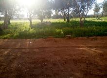 للبيع ارض زراعية دلم الحرجلة