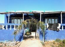 ferme de 2600 m2 a région rommani avec 2 maisons