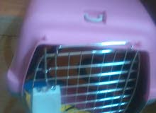 قفص قطط للبيع