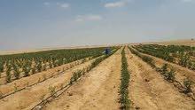 اراضى زراعيه للبيع مقدمه من شركه الامل للاستثمار الزراعى