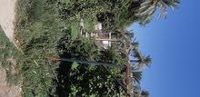 ارض ملك صرف زراعى 7دونم فى الزعفرانية مزراعة معا بيت كاملة مثمرة على الشط يفرق بينها والشط شارع