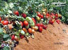 25فدان زراعيه واستثماري  كاملة المرافق