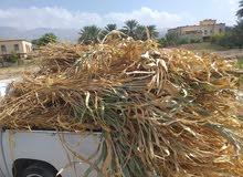 ذره عمانية يابسه
