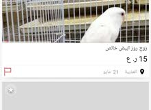 شخص اخذ بيانات الطيور ورسلهن في اولكس