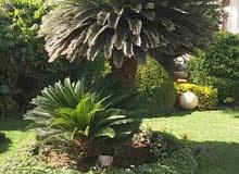 اختصاصي تصميم وتنسيق الحدائق مقيم في السلطنه يبحث عن عمل
