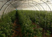 ارض تجاريه للبيع + مزارع +عقار +فلل