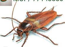 شركة مكافحة الحشرات والصراصير بأقوي المبيدات الحشراية مع الضمان شركة