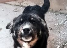 كلب ذكر عمر 4 شهور
