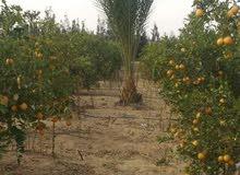 20فدان مزرعة بها استراحة مسجله خالصة الأوراق بالفيوم الاستلام فوري
