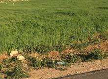 قطعة أرض للبيع اسكان ضريبة الدخل حوض مرج البير