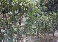 بيع أو مراوس قطعة بستان وفيها دار سكن المساحه 500 متر