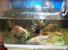 حوض سمك يحتوي على 14سمكه السعر350الف دينار