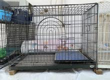 pet cage large