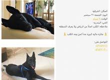 MISSING DOG كلب مفقود