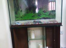 صندوق سمك مع اكسسواراته