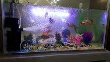 حوض كامل من كل شي ويحتوي على سمك كولد تقريبا 20 وحدة