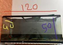 Big fish tank 120 *50 cm