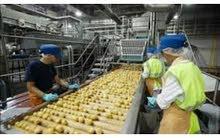 مطلوب فورا عمال تعبئه وتغليف في مصنع مواد غذائيه