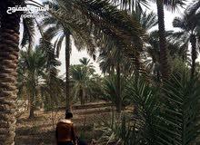 دونم للبيع ابو خصيب حمدان قرب