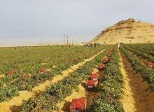 ارض زراعيه للبيع قطعه ارض 50 فدان
