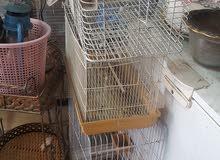 اقفلي طيور للبيع