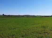 أرض فلاحية ممتازة بمدينة بوزنيقة