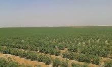 35 فدان جاهزه للزراعه تصلح لجميع المشروعات وبها جميع المرافق طريق مصر الفيوم