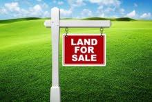 ارض للبيع 4 الاف دينار الدونم **من المالك مباشرة ** الرمثا