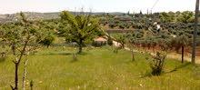 3600م² للبيع في بيرين العالوك( المسره) بجانب شاليهات ومزارع خاصة