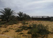 ارض كبيره للبيع اواجار قريبه من بريده بوثال