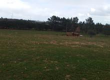 قطعة ارض للبيع مساحتها 1600م فى منطقة سكت على القطران الاستفسار الاتصال 09155003