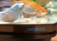 حوض سمك مع الطاوله