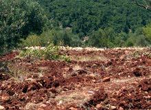 أرض ساحرة في قلب الطبيعة على قمم جبال عجلون -ألأردن