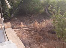 مزرعه للبيع بيرين صروت بدخلها بيت ريفي
