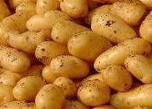 الزعيم للتصدير اجود انواع البطاطس اليمني