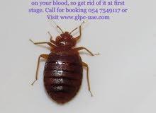 Pest control & Furniture cleaning in Dubai
