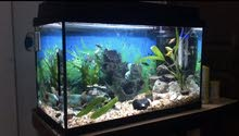 16 gallon Jewel fish tank for sale