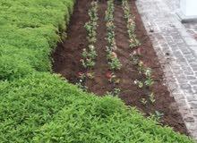 الافندي للمسطحات الخضراء وزراعة نباتات الزينة