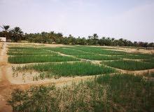مزرعة للبيع لمحبين القت والماء العذب