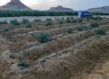 مزرعه 28 فدان بطريق اسيوط الغربى قريبة من الطريق اول مدخل نبع حكيم